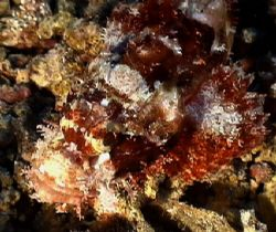 Scorpion Fish close uo. Sony P350 by Marylin Batt